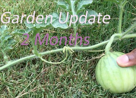 Garden Update: 2 months in!
